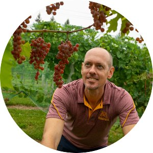 Matt Clark wearing a University of Minnesota polo looks up at a vine of grapes