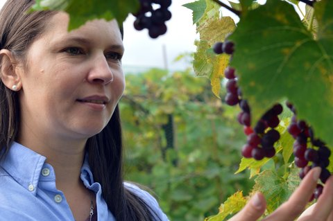brunette woman investigating a vine of purple grapes